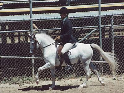 Vintage Forstar 